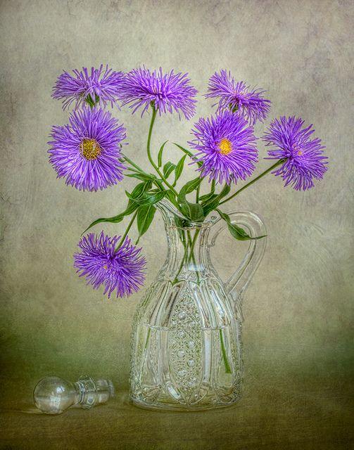 Mandy disher peinture fleurs couleur lavande et marguerite - Peinture couleur lavande ...