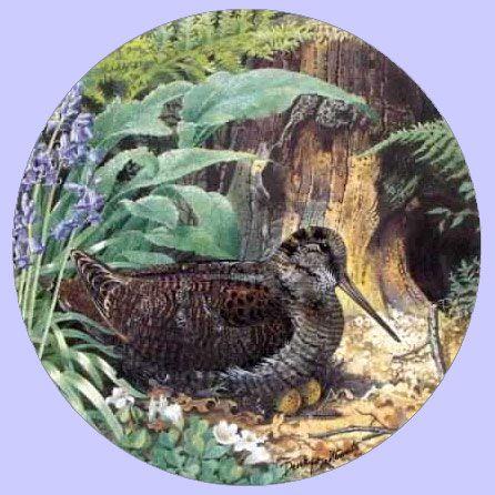 Braithwaite Game Birds The Woodcock - Royal Grafton - Derek Braithwaite · Game BirdsDecorative Plates & Best 143 Art - Decorative PLATES images on Pinterest | Decorative ...