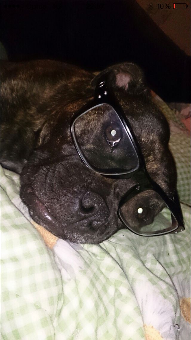 Kiana is all about knowledge . Staffy dogs
