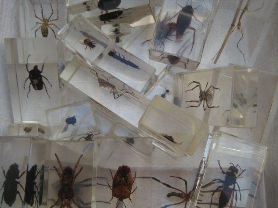 FeelGood Market online:Insecten