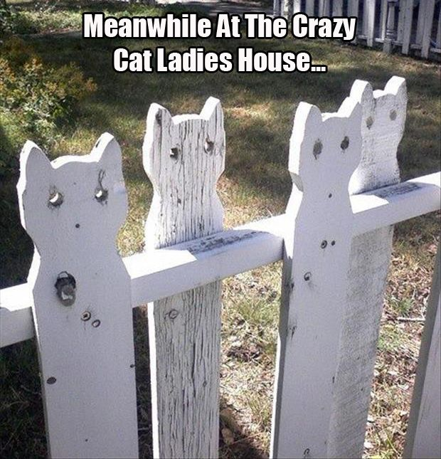 Find Ideas for Fences. Crazy Cat ...