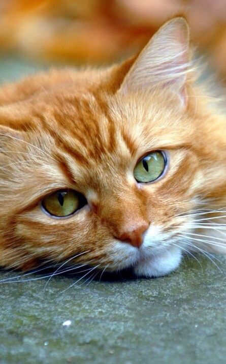 """* * """" Furever be fer dreamers. Me doesn'ts haz to justs yetz cuz o' me nine lives. Soes me willz enjoy reality. Az Robert Frost, de great human poet once said: 'and miles to go  before me sleeps.' """""""