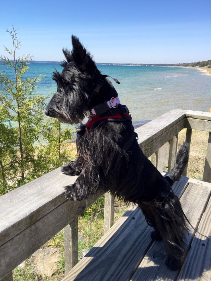 At The Park On Main in HIghlands, NC, we love Scottie Dogs like our mascot Mr. Pickles! http://theparkonmain.com/