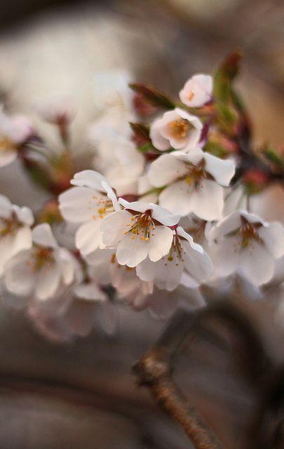 Spring in Canterbury, Kent
