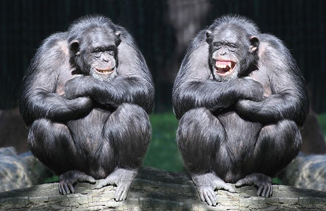 10 laughing animals that will leave you in stitches #animals