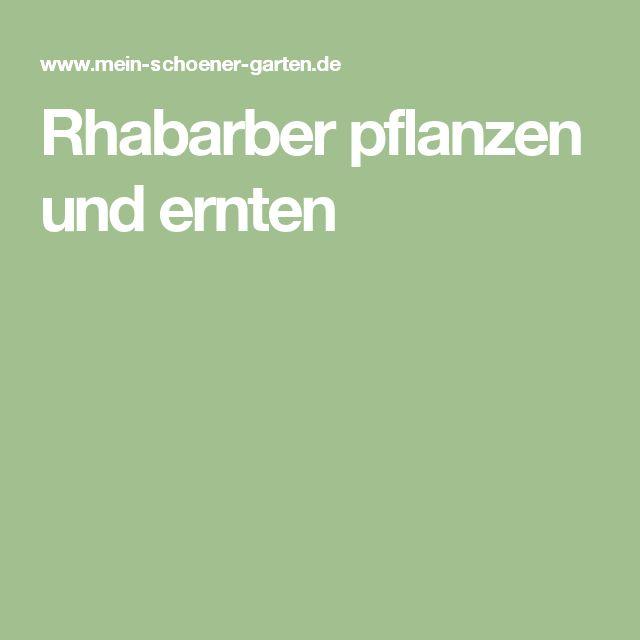 více než 25 nejlepších nápadů na pinterestu na téma rhabarber, Terrassen ideen