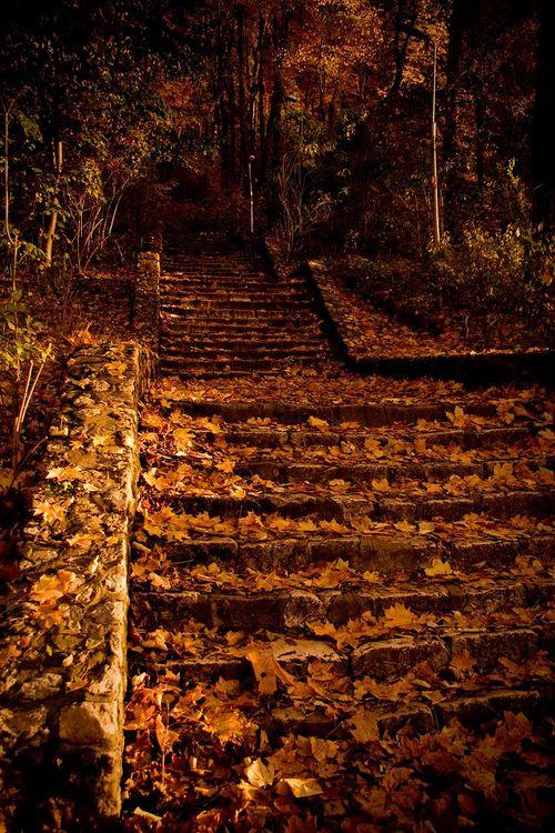 Autumn Paths, Fall Leaves, Autumn Leaves, Autumn Dreams, Favourite Seasons, Favorite Seasons, Autumn Falls, Fall Step, Leaves Stairways