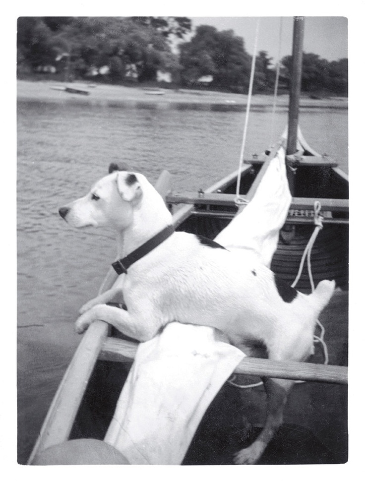 Sailing Feist or Jack Russell Terrier Dog - 11x14.5 Fine Art Wall Print. $25.00, via Etsy.
