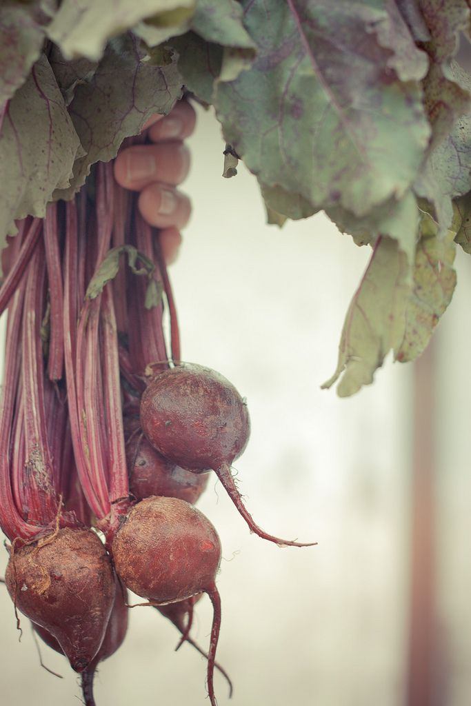 Does Washing Fruits and Vegetables Prevent Foodborne Illnesses?