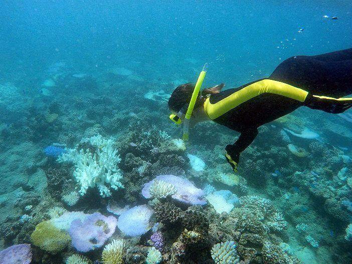 POST NOVO NA ÁREA!  Mergulhar na Grande Barreira de Corais da Austrália também faz parte da sua Bucket List?  Então este post foi feito para você!  Acesse http://ift.tt/1ZbGH4z ou o link no nosso perfil e confira o primeiro passeio que fizemos na região.  Ainda nesta semana publicaremos outro post contando como foi a nossa primeira experiência de mergulho com cilindro. Fique de olho!  #cairns #grandebarreiradecorais #australia #unesco  #pegadasnaaustralia #pegadasnaestrada  #vocenooff…