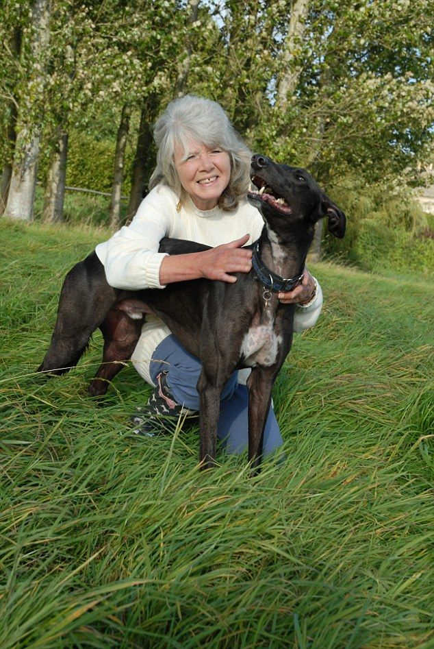 Jilly Cooper Reveals Horrors Endured By Her Greyhound Before Adoption Greyhound Pictures Greyhound Greyhound Adoption