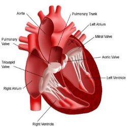 Top 4 Ischemic Heart Disease Symptoms