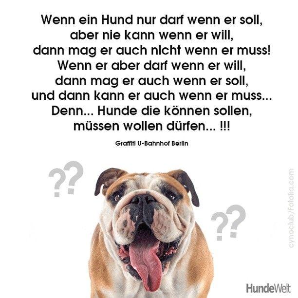 Hundeweltofficial Hunde Lustig Mussen Wollen Durfen In 2020 Animals Dogs