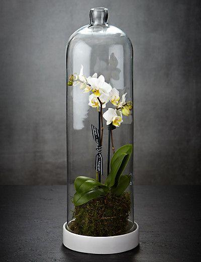 Pure Orchid Terrarium Flowers