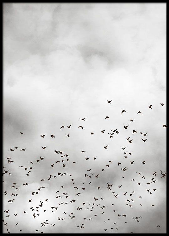 Poster met fotokunst, vogels en wolken, 50x70, 22eu