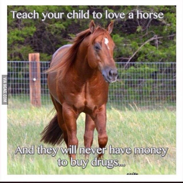 Funny Pony Quotes: Horses Are Expensive They Won't Have Time Or Money For