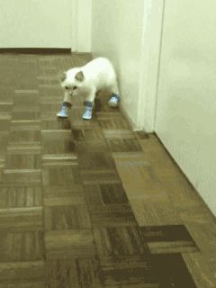 Puss in Boots (GIF - click twice for animation) Reminds me of myself, morning, pre-caffeinated   ___ Click the Link in my Bio <@jurale13> and what you will find there use it as a Gift.
