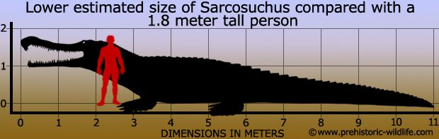 sarcosuchus | Thread: Megalodon-real life Jaws