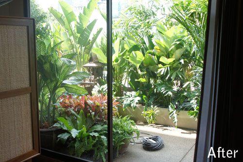 Tropical Plants Balcony Thailand Balcony Plants Privacy