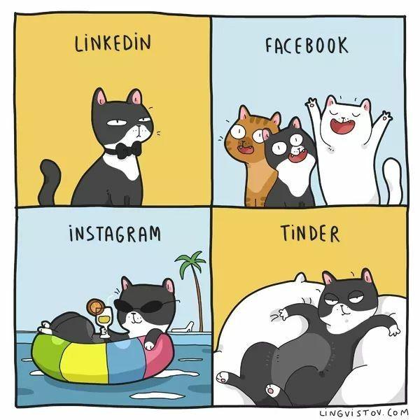 Pin Von Tia Hendry Auf Stickers In 2020 Katzen Tiere