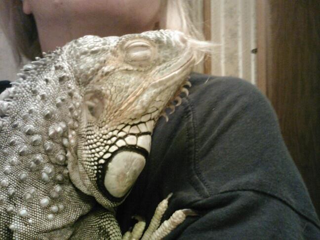 My Big Snuggly Igy