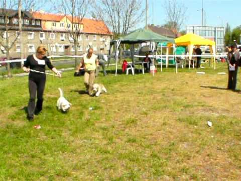 Dog Show - Opole 2009 - www.pbgv.pl - PRET-A`-PORTER Pangea cz. 3