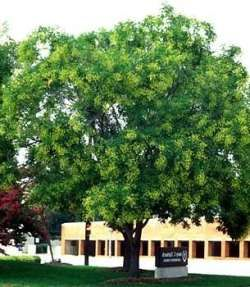M s de 25 ideas incre bles sobre rboles de crecimiento for Arboles de jardin de crecimiento rapido
