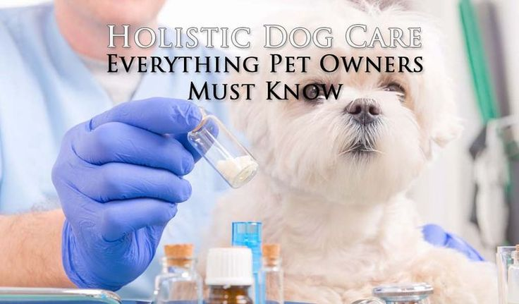 "When people hear the term ""holistic"" they typically think about alternative medicine. It brings to mind acupuncture and herbal remedies alone. This is a common misconception, as holistic dog health actually combines several traditional and alternative therapies to treat ailing dogs into a single approach with the focus on what's most important. #holistic #dog #care #veterinary #alternative #pets #dogs"