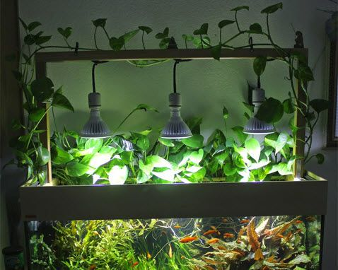 DIY Wood Frame Aquarium Lights - a great way to add foliage above the tank, as…   #aquariumlighting #MHDE #HIT