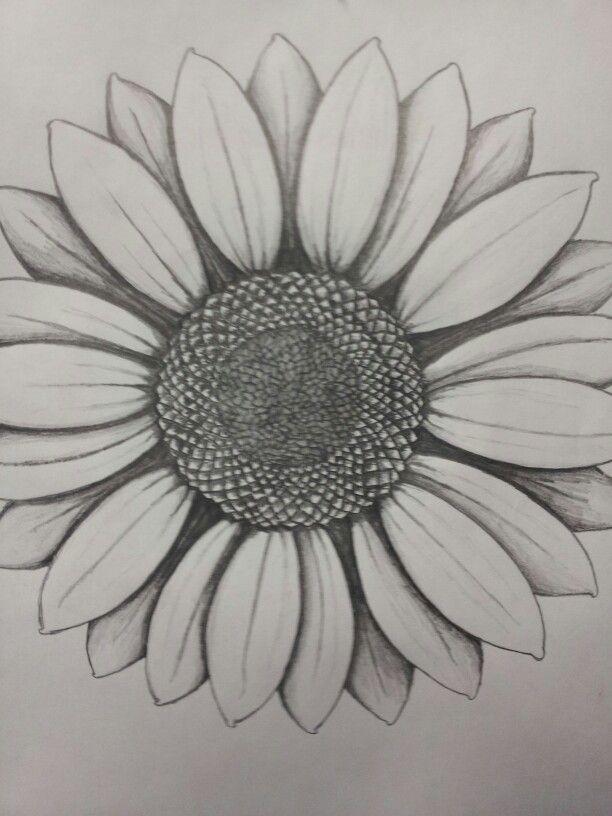 Found On Bing From Moziru Com Sunflower Drawing Flower Sketches Sunflower Sketches