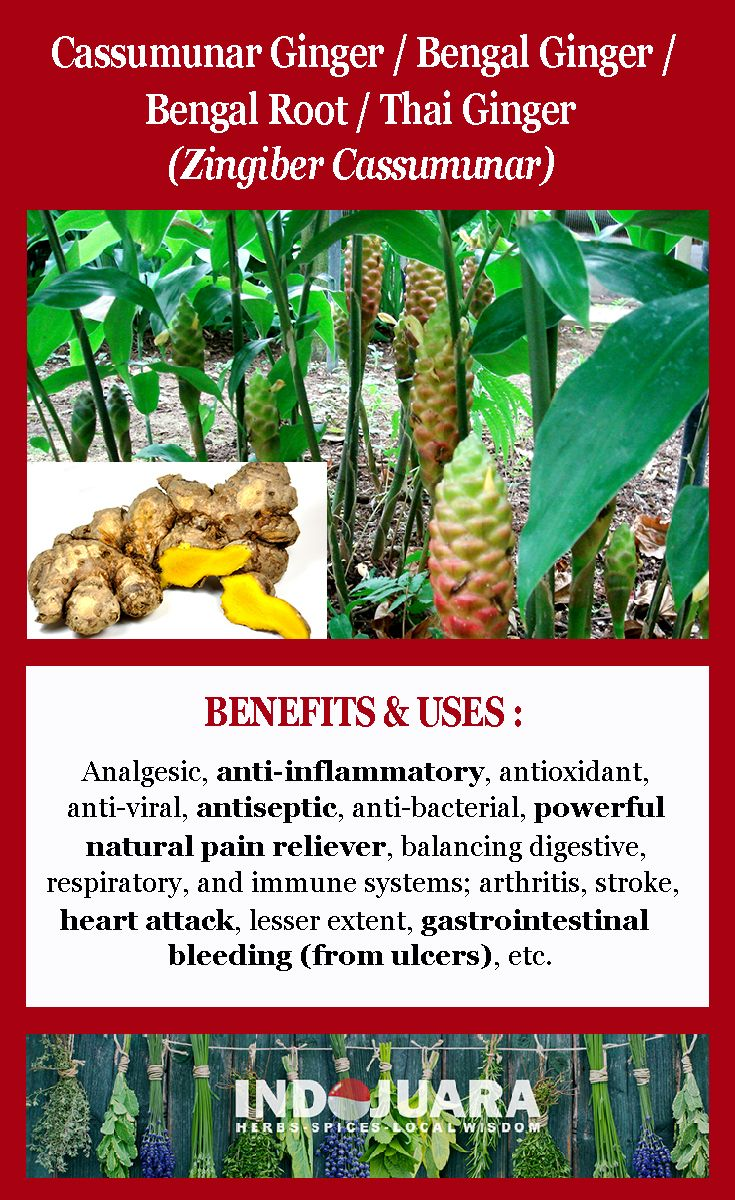 superior analgesic, Inflammation, arthritis, stroke, heart attack, to a lesser extent, gastrointestinal bleeding (from ulcers), anti-inflammatory, natural pain reliever, antioxidant, antiviral, antiseptic, antibacterial, balances the digestive, respiratory, and immune systems, etc #ZingiberCassumunar #driedherbs #herbalremedies