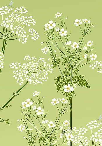 Image result for queen annes lace botanical illustration