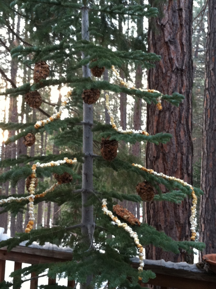 After christmas tree for the birds.
