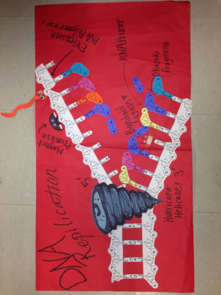 Dna Replication Poster  With Images
