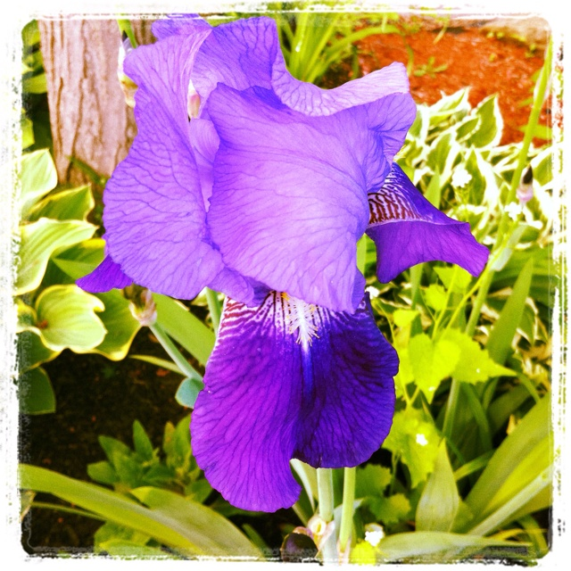 May Garden -- Day 18