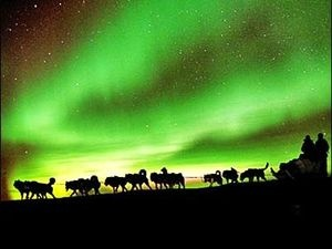 Dog Sled/Northern Lights Tour in NWT or Yukon