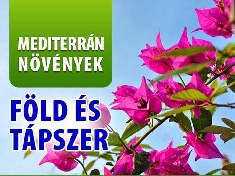 Mediterrán növények ápolása - milyen föld és tápszer jó?
