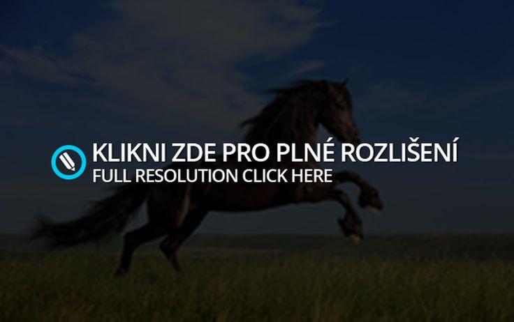 Různé fotky #10 | Koně a poníci