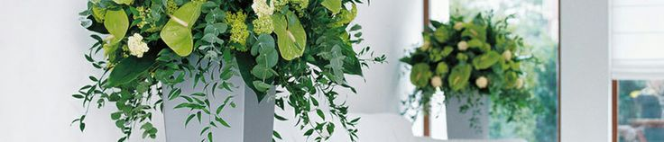 Tips for Increasing Humidity Near Indoor Plants   ProScape