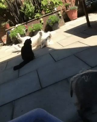 Trying his best to cheer up a friend.. : gifs
