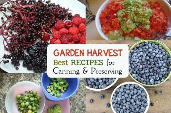 There are many things you can be growing in a garden that can easily be preserved. This includes using a variety of recipes for canning and preserving food.
