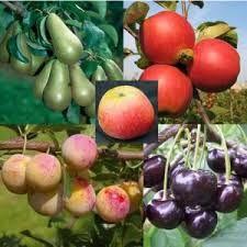 fruitbomen - Google zoeken