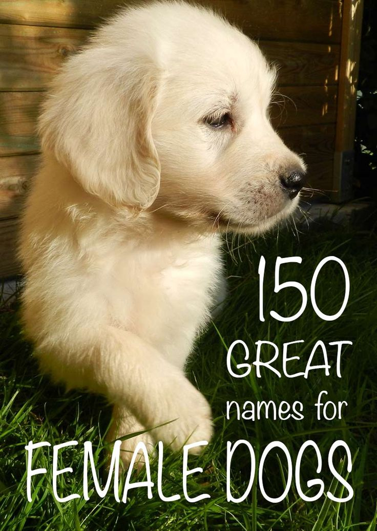 Over a hundred and fifty great girl dog names to choose from!