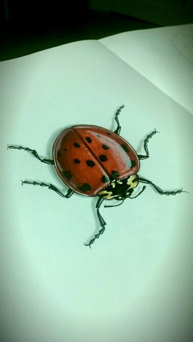 Ladybug illustration by Wouter Haine www.dutch-designs.eu . Pen, ink, marker, colored fineliner and acrylics on paper.