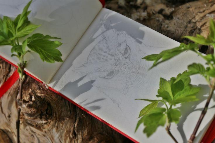 Owl sketch in sketchbook