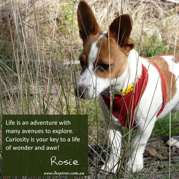 Small puppies and children remind us about the excitement of exploration and discovery. Nurture your curiosity and use it to broaden your landscape, sharpen your mind and fill your world with wonders. www.deeptree.com.au  #Rosiesays #Rosie #wisdom #insipration #deeptreelifecoaching