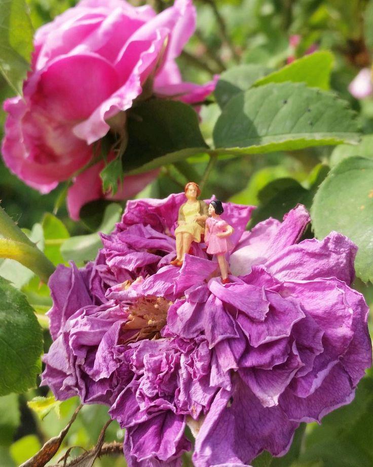 """La vida y sus ocasos... . . . """"Y los médanos serán témpanos En el vértigo de la eternidad Y los pájaros serán árboles En lo idéntico de la soledad En tu nombre"""" Cactus - Gustavo Cerati . . . . . . #enelbosque #enelbosqueflorece #flowers#flores#flower#flor#naturaleza#nature#naturelovers#campo#spring#primavera#instagood#inspiration#hallazgosemanal#granada#rose #rosas #rosa#farmerflorist #florist#farmer#floraldesign#floralart#natura #natureshots #naturephotography"""