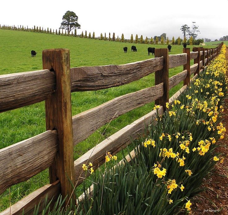 country rail fence winter - photo #21