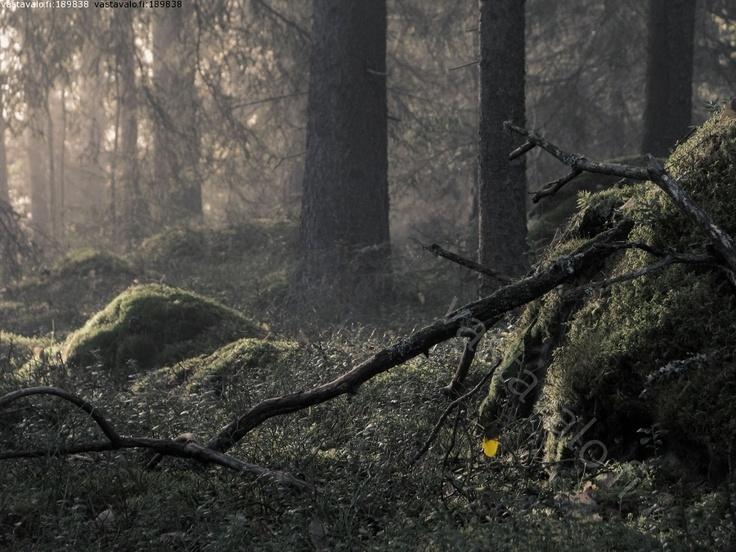 Pelottava korpi sumussa. A bit scary old forest in fogg.