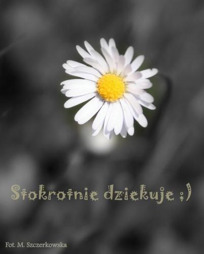 http://www.ekartki.pl/cards_files/26/26608_stokrotnie%20dziekuje.JPG